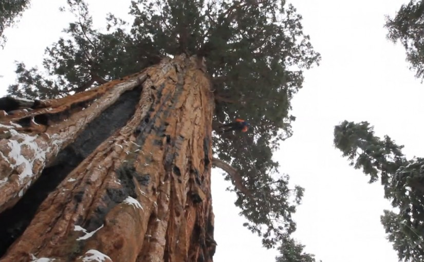 This 3200 Year Old Tree Is So Huge It's Never Been Captured In A Single Image…Until Now.